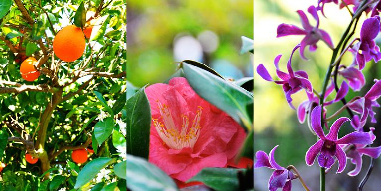Mary's beautiful garden