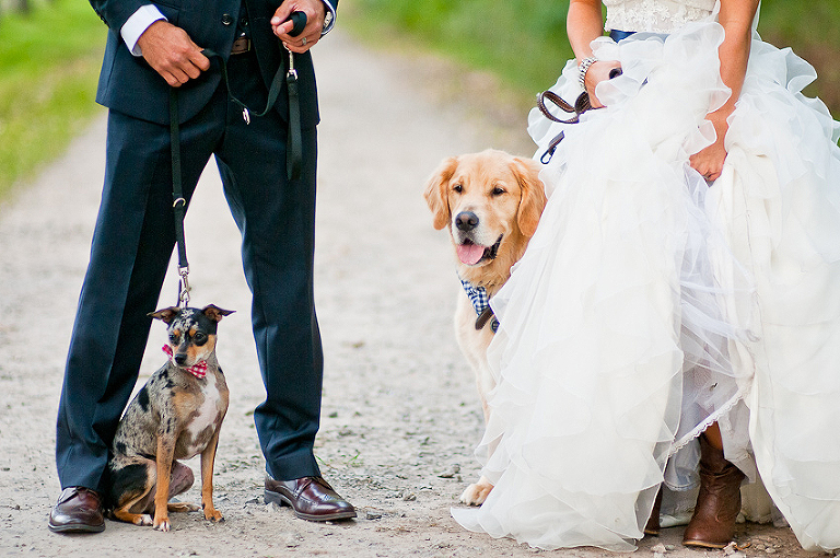 Bride-and-Groom with their dogs